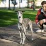 Poika ja koira puistossa.